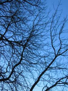 branches and blue